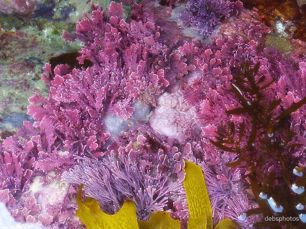 Sea Garden by debsphotos