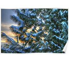 snowy pine at sunset Poster
