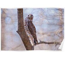 Hawk at Lake Martin Poster