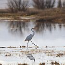 Walk like an Egret by Kimberly Palmer