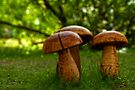 hard shrooms by Manon Boily