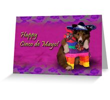 Cinco de Mayo Shetland Sheepdog Greeting Card