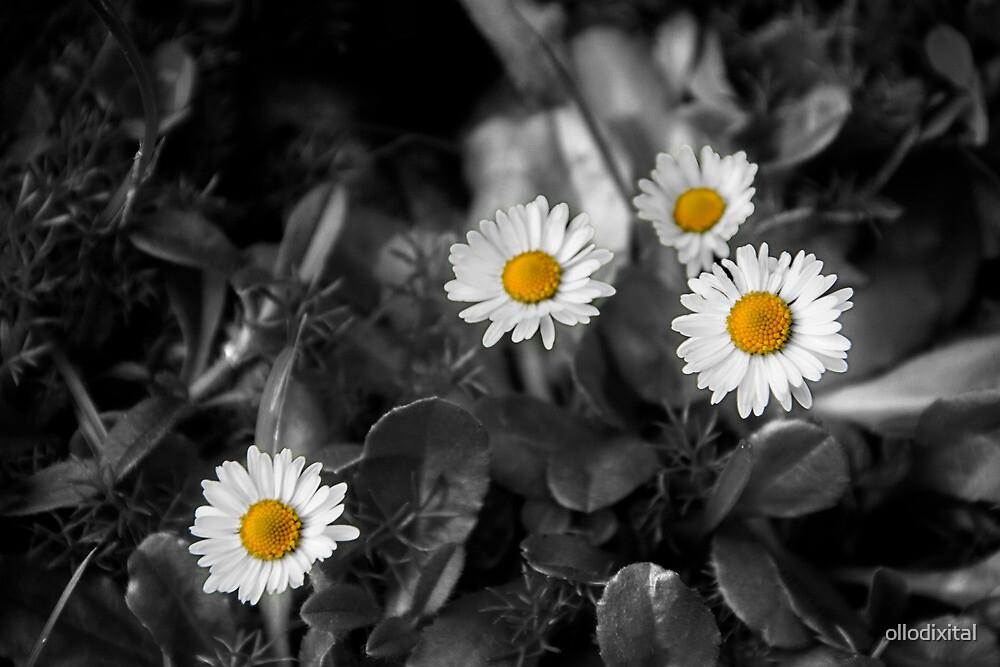 Flower4 by ollodixital