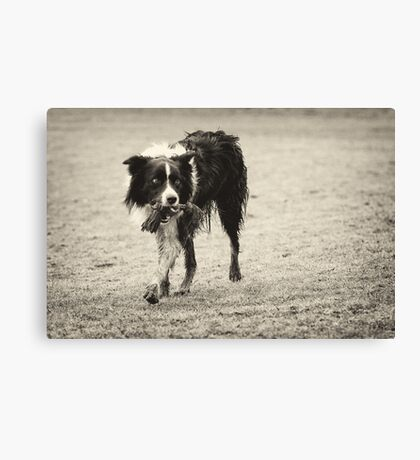 Playtime Canvas Print