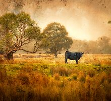 An Australian Country Scene by annibels
