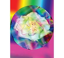 Rainbow rose with some red accents Photographic Print