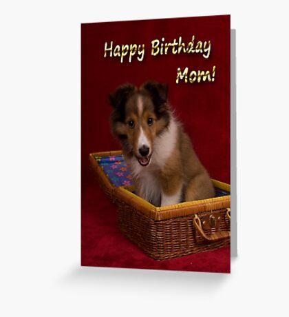 Birthday Sheltie Puppy Greeting Card