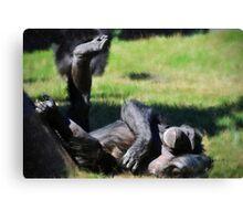 Chimp Sunbathing Canvas Print