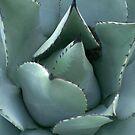 Prickly Blue. by Lynn Curry