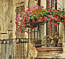 New Blooms; Old Walls-Cesi, Italy by Deborah Downes