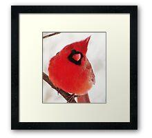 Mister Cardinal Framed Print