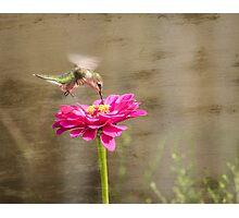 Ruby-throated hummingbird 12-2015 Photographic Print
