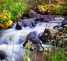 Sunrise Spring Mountain Creek by Reese Ferrier