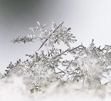 The Fallen Snow by Jane Brack