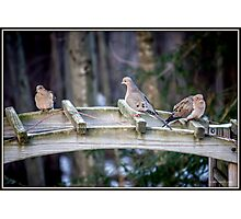 Morning Visit From Mourning Doves Photographic Print