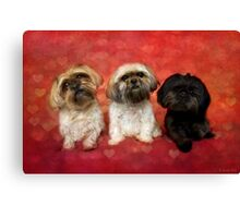 Lovely Trio  Canvas Print