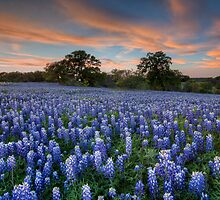Texas Bluebonnets in the Hill Country 1 by RobGreebonPhoto