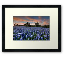 Texas Bluebonnets in the Hill Country 1 Framed Print