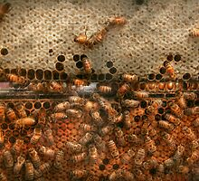 Apiary - Bee's - Sweet success by Mike  Savad