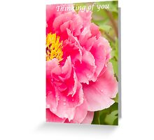 Peony close up Greeting Card