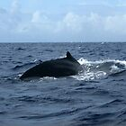 How the Humpback Got Its Name by Maurine Huang
