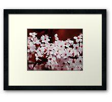 Cherry blossoms VRS2 Framed Print
