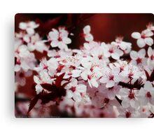 Cherry blossoms VRS2 Canvas Print