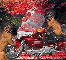 ☝ ☞ STOP..LETS GET THINGS STRAIGHT DOGS RULE ..WHAT PART OF THAT DON'T U UNDERSTAND?? RUFF ☝ ☞ by ✿✿ Bonita ✿✿ ђєℓℓσ