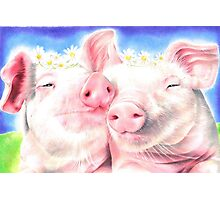 Peace Pigs Photographic Print