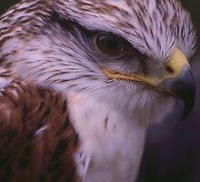 Killer Beak by Francis Drake