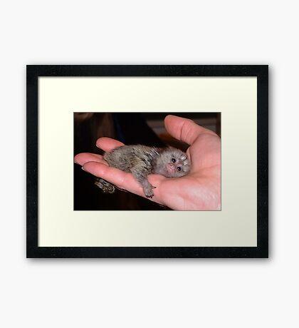 Palm Pet Framed Print