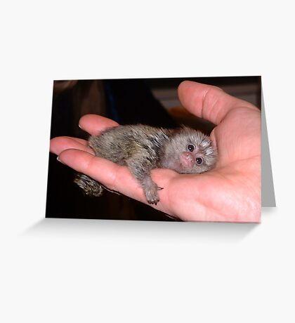 Palm Pet Greeting Card