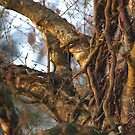 Ivy Roots in the Tree by vivendulies