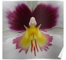 Butterfly in Orchid Poster