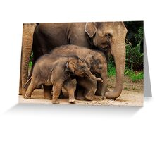Young Elephants Greeting Card