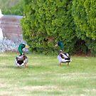 Quack! by Kathi Arnell