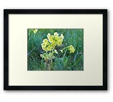 Cowslips in the Morning Dew VRS2 Framed Print