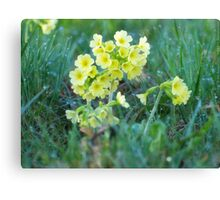 Cowslips in the Morning Dew VRS2 Canvas Print