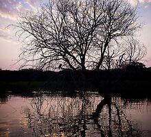 Sunset on the Okavango River Tree by IamPhoto