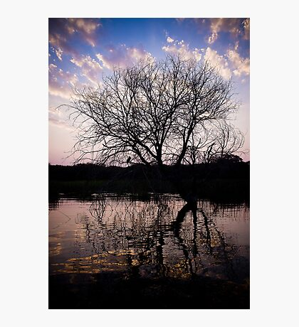Sunset on the Okavango River Tree Photographic Print