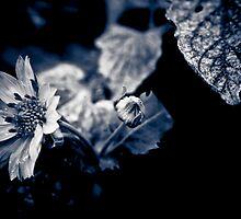Garden life  by IamPhoto