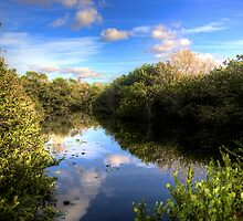 Everglades Pond by Bill Wetmore