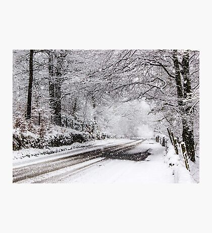 Granby Wood Photographic Print