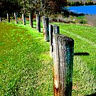 Fence at Hemlock Lake by teresa731