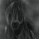 Ghost Gypsy vanner by Laura Thai