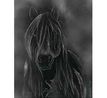Ghost Gypsy vanner Photographic Print