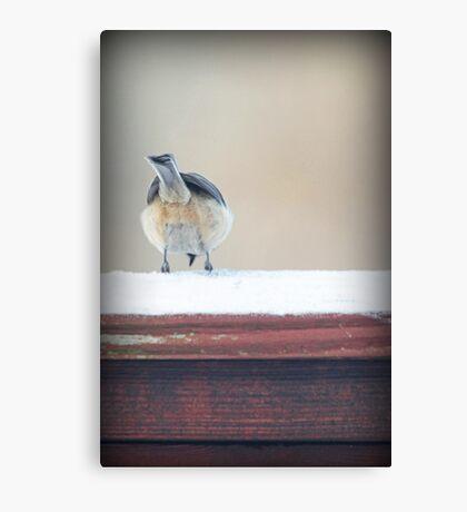 Birdie Bum ~ Canvas Print