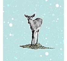 FAWN Photographic Print