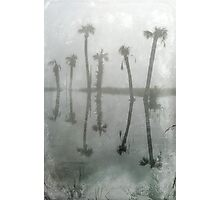 6 Palms Photographic Print