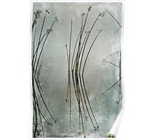 Lake Grass Poster